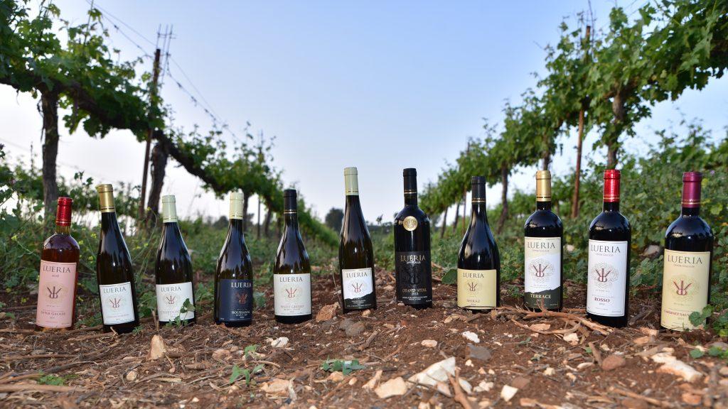 lueria wines (5)